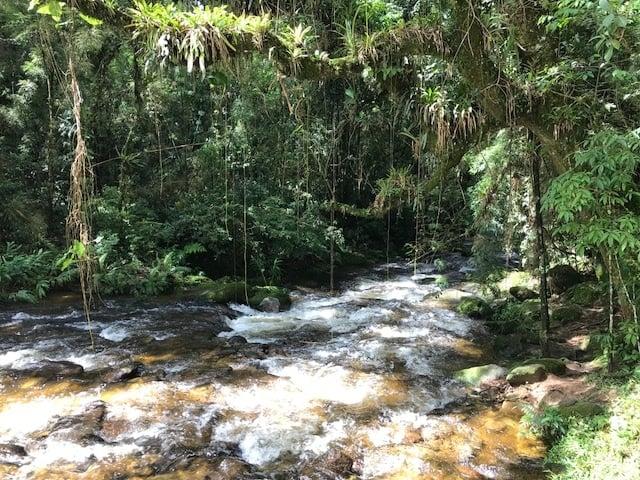 Rio de Visconde de Mauá adornado pela mata ciliar