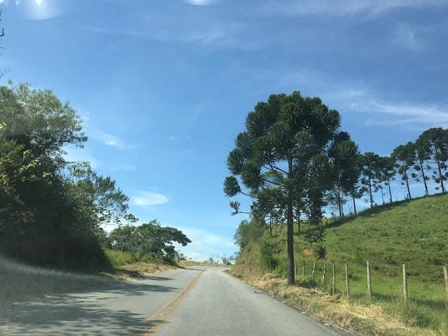 Estrada de asfalto para Visconde de Mauá com araucárias ao lado