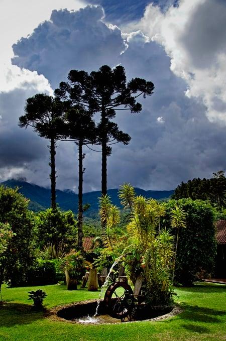 Jardim de araucárias e montanhas ao fundo em Maromba