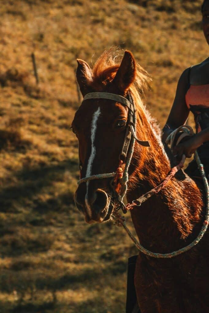 Cavalo em Visconde de Maua